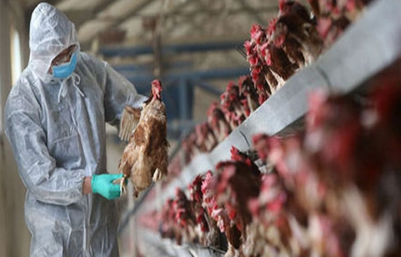 Second case of H5N8 bird flu found in Hungary in a week