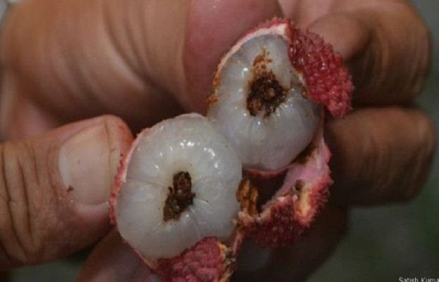 Lychee cause of mysterious disease that plagued Indian town
