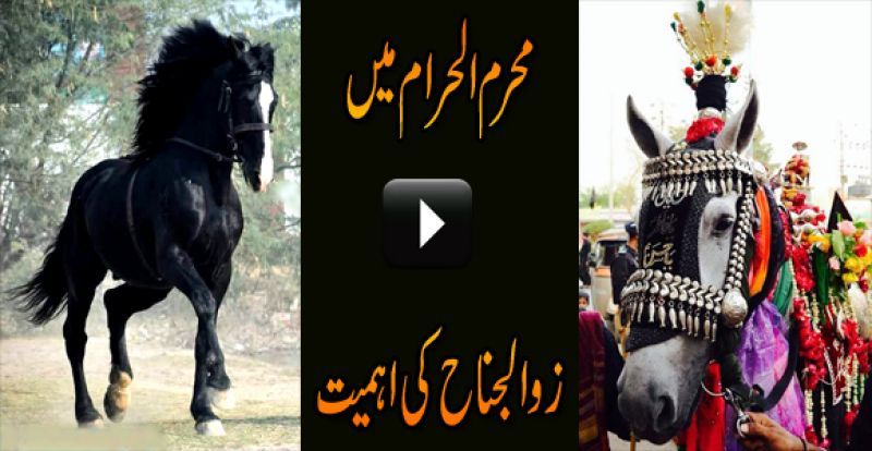Zuljanah (Dhuljanah) is name of horse of Imam Hussein a s in Karbala