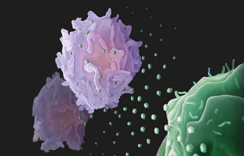 Cancer cells use biological 'drones' to battle immune system