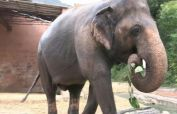 Kaavan sets out on excursion to Cambodian safe-haven
