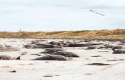 Almost 100 pilot whales die in New Zealand stranding