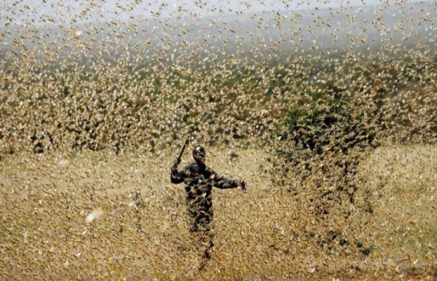 Balochistan most affected province by the locusts attack: NDMA