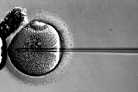 Britain asks: Should 3-parent IVF be allowed to avoid disease?