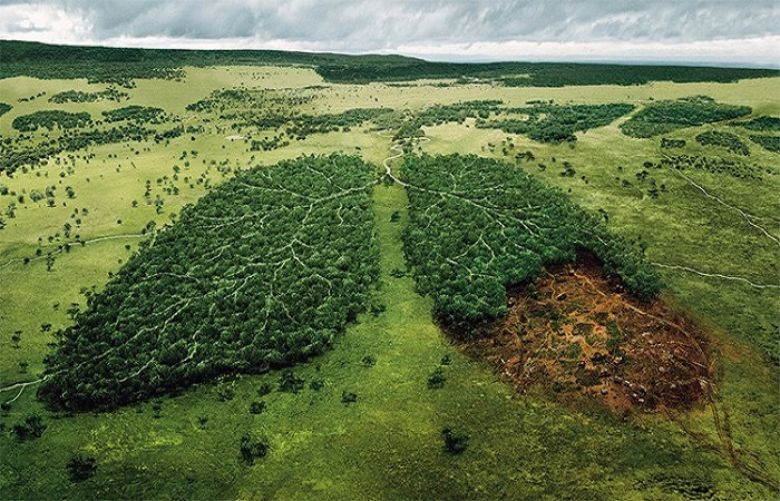 Image result for Norway Becomes World's First Country To Ban Deforestation