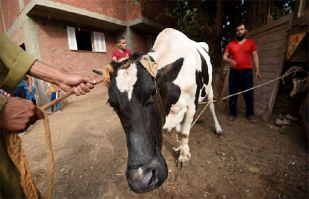 Animal sacrifices, festivities continue on second day of Eidul Azha