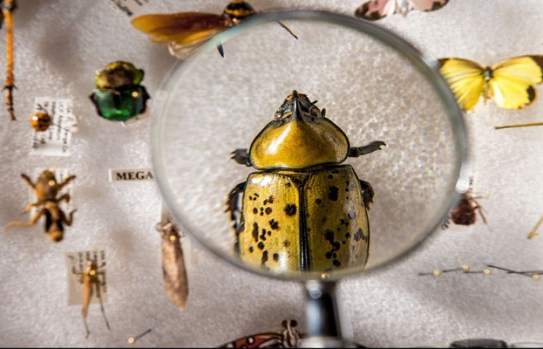 Forty-one percent of global insect species are at risk, a new study finds.