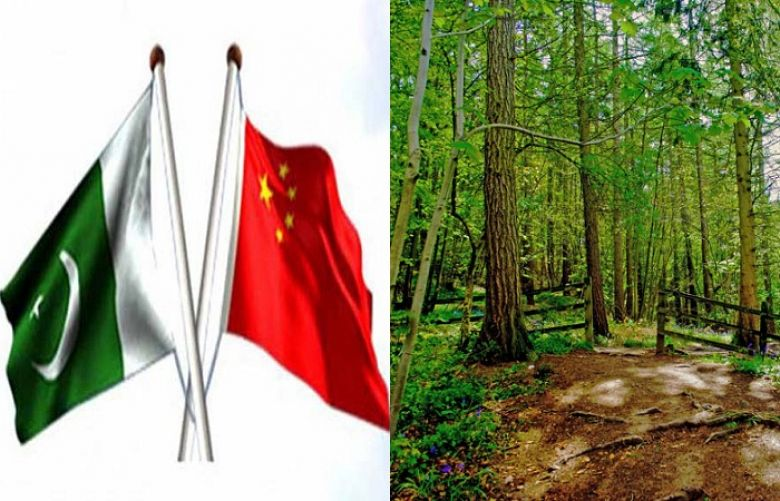 China, Pakistan identify priority areas for cooperation in forest sector
