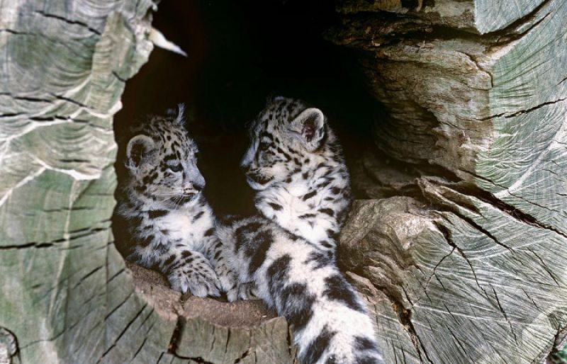 Leopards Live In Some Of The World S Most Exotic Locations