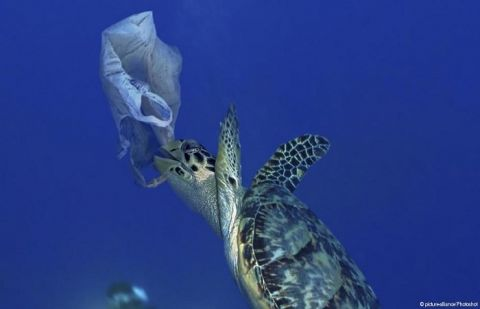 Plastic is literally forever — it never actually biodegrades, only breaks down into ever-smaller pieces