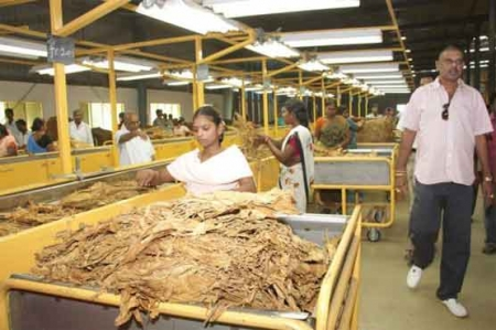 Asian tobacco growers reject curbs
