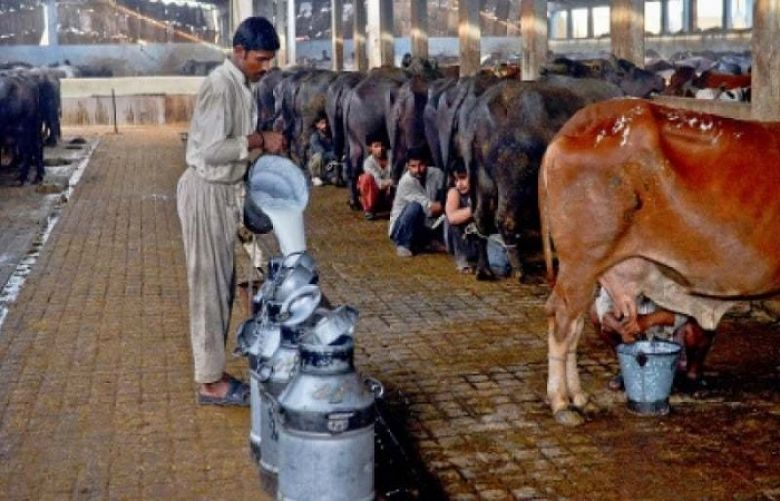 Govt working on laws to revive dairy sector