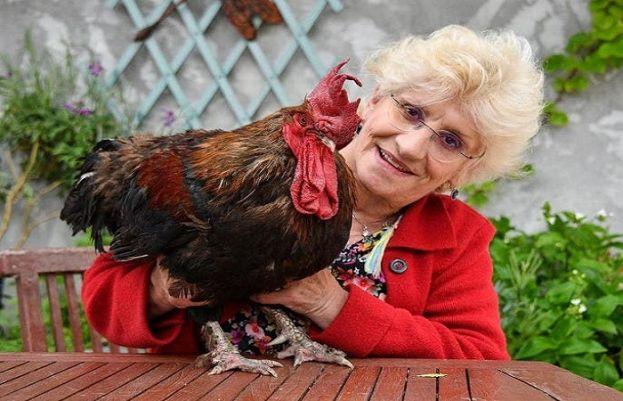 پڑوسی کے ہاتھوں مرغا قتل