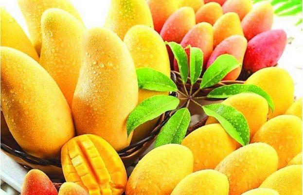 پاکستان میں آم کی برآمدات میں اضافہ